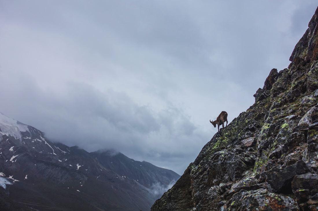 matterhorn hornligrat 2019025
